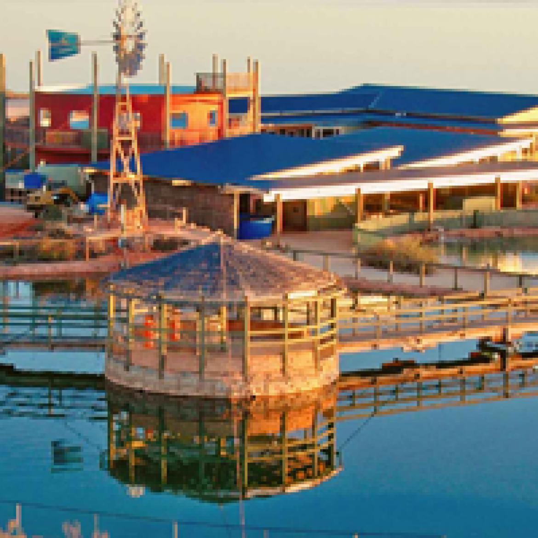 Ocean Park Aquarium – Shark Bay, Water Clarity issues