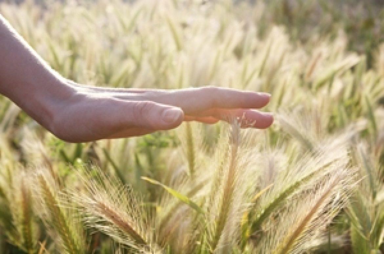 Bumper grain crops for South Australia