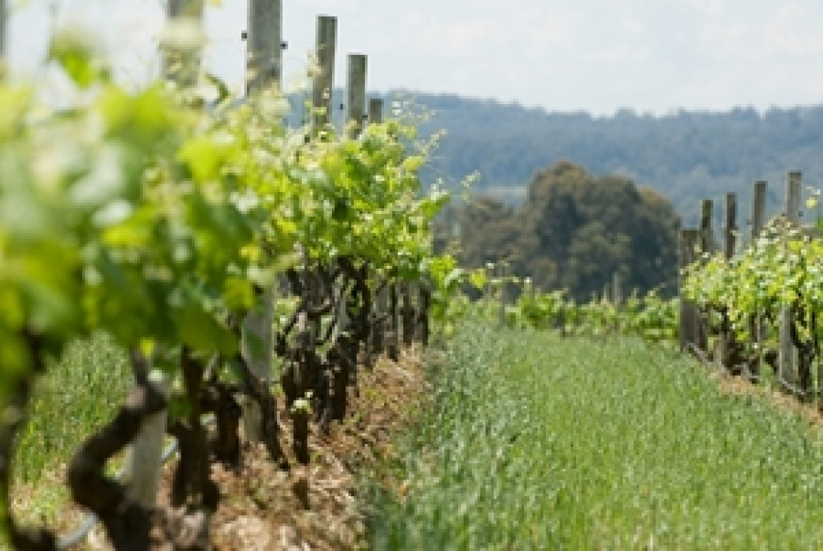 Australian viticulture thrives as wine exports grow