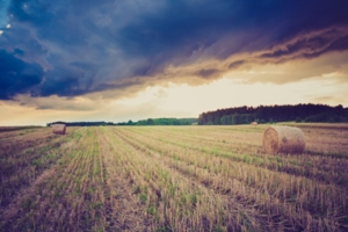 Climate change could limit future wheat crops