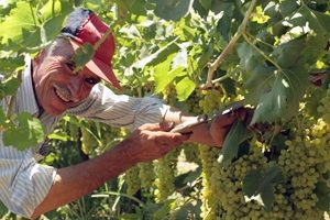 Irrigation and water research to boost Australian grape growing