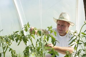 Why is water quality important in hydroponics?