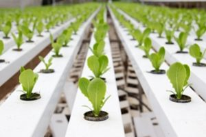 How can Hydrosmart help hydroponic growers?