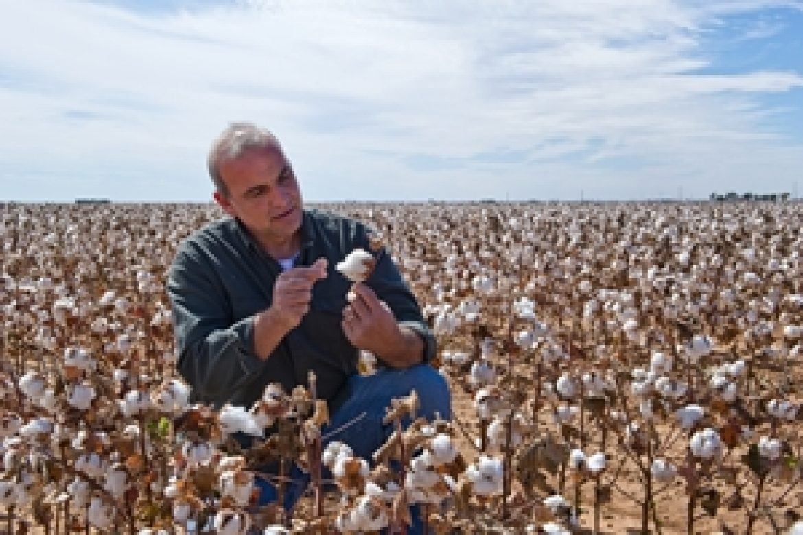 Will drought conditions hamper Australia's cotton prospects?