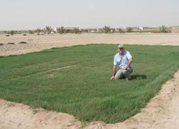 Desert Grass – After