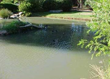 Pond with no algae - After
