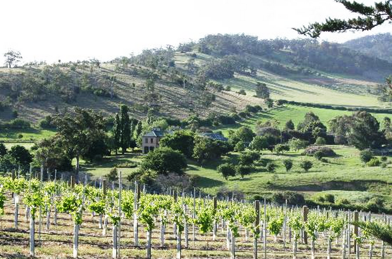 Pooley Wines - Vineyard