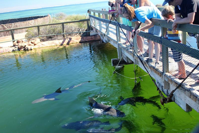 Ocean Park - Sharks