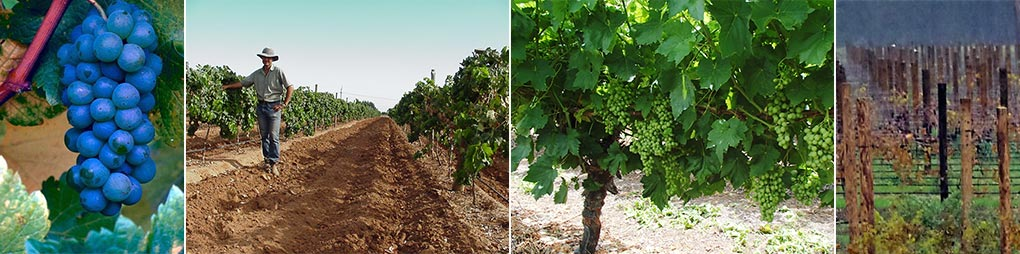 Viticultural Solutions