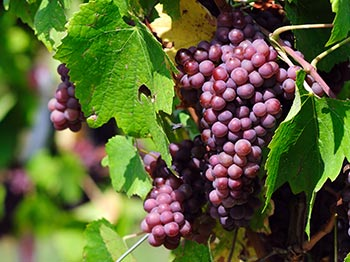 Viticulture Solutions